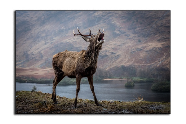 Monach of the Glen by Capture_Photography