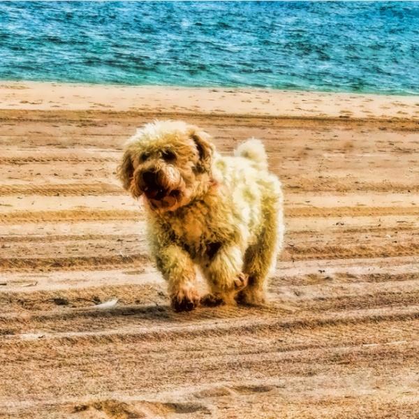 Buddy on Beach by jjnxyz