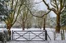 Snow scene by carper123