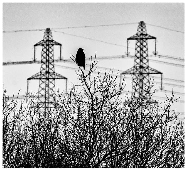 Between the Pylons by Nikonuser1