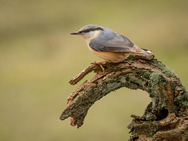 nut perch by Stevetheroofer