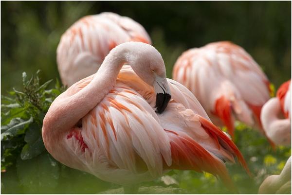 Three Flamingos............Well sort of. by danbrann