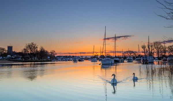 Quay Swans by NickLucas