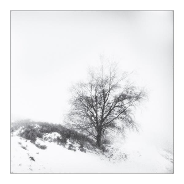 Folded in Winter by gerainte1