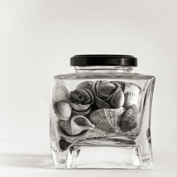 jar of shells by 66