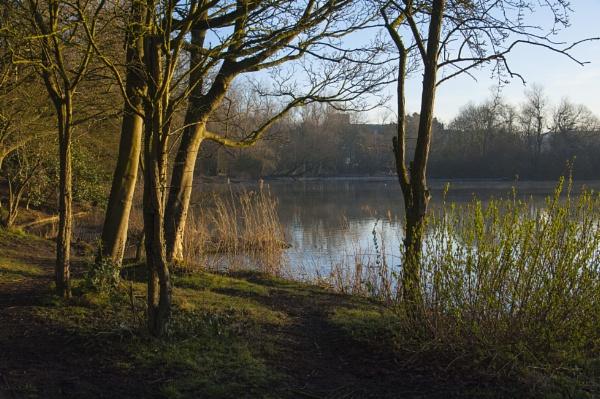 Early Morning Lake
