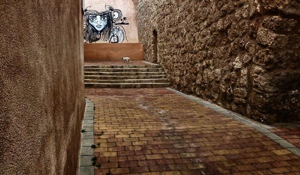 Alley Cat by Zydeco_Joe