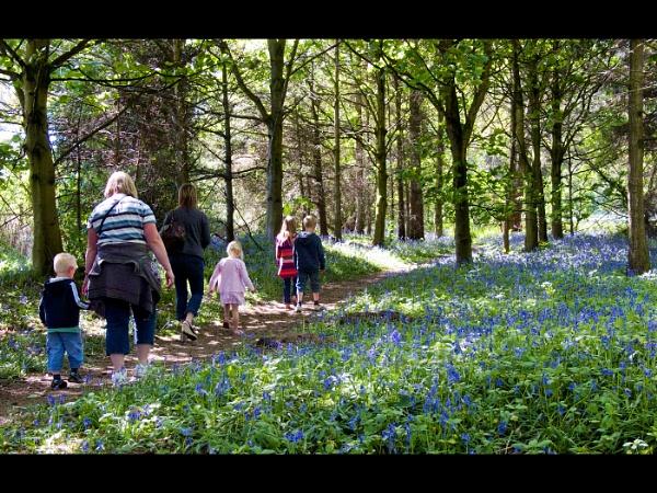spring walk by jimlad