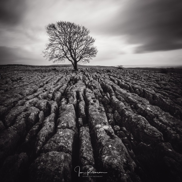 The lone Tree by ianrobinson