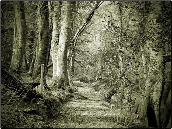 Gwaun Woods