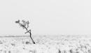 Alone by ArtyArt