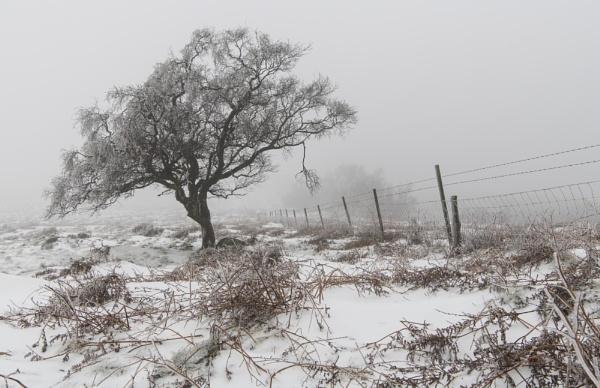 Frozen Limb by Trevhas