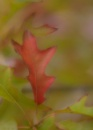 Shades of Autumn by ColleenA