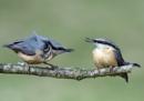 Still arguing! by Holmewood