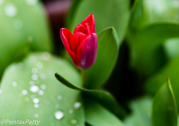 From the spring garden by pentaxpatty