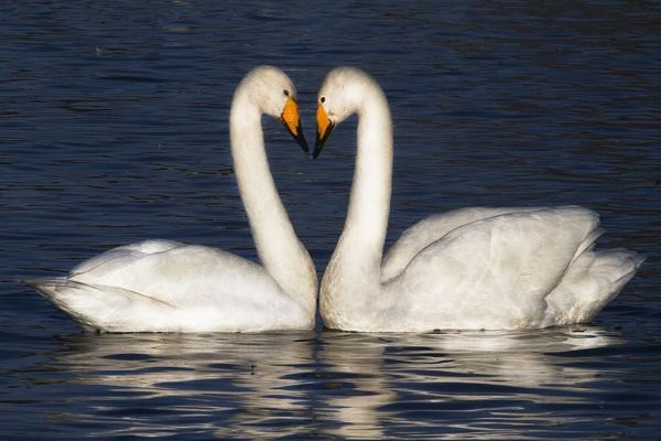Love Is by danbrann
