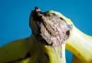 Banana Junction by DaveRyder
