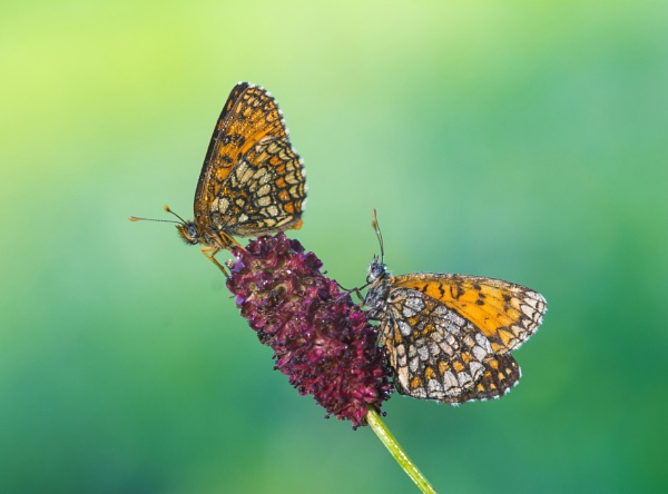 Two butterfly\'s... by Nino812