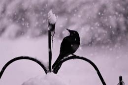 *** Spring Snowfall ***