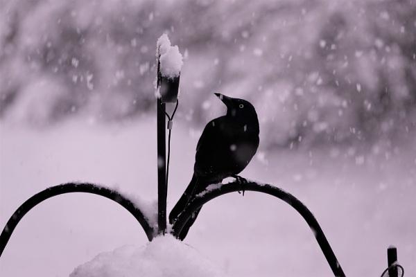 *** Spring Snowfall *** by Spkr51
