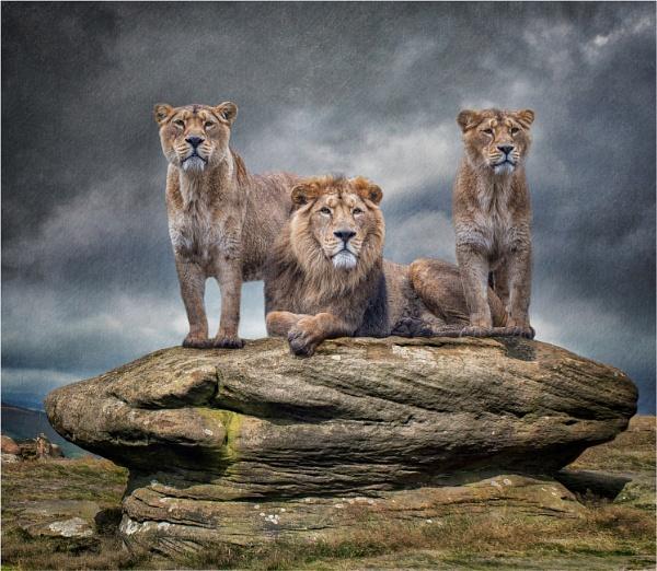 Pride by Somerled7