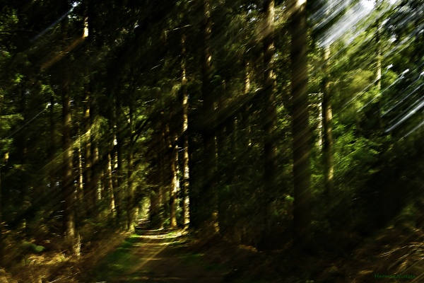 forest light by HarmanNielsen