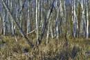 POLAND - Nature's Impressions No.63 by PentaxBro