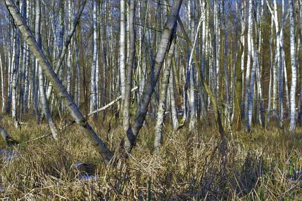 POLAND - Nature\'s Impressions No.63 by PentaxBro