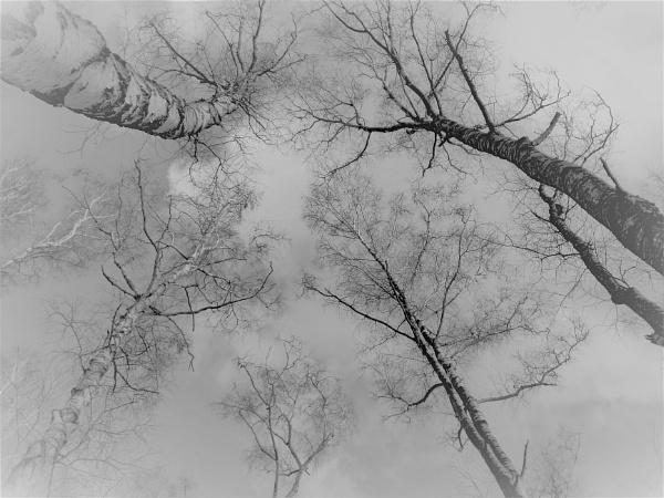 POLAND - Nature\'s Impressions No.29 by PentaxBro