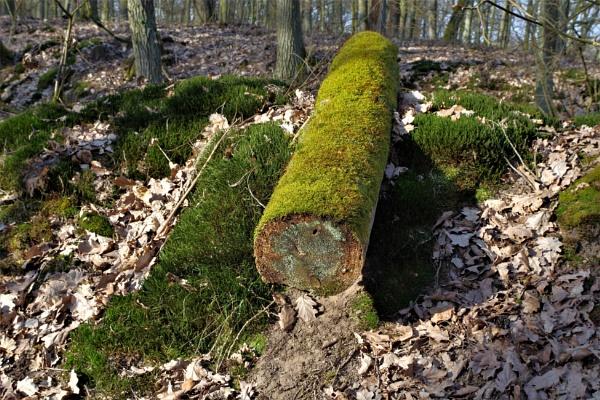 POLAND - Nature\'s Impressions No.53 by PentaxBro