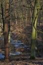 POLAND - Nature's Impressions No.62 by PentaxBro