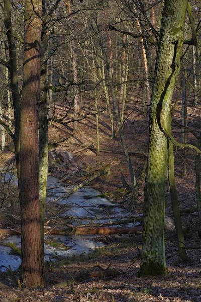 POLAND - Nature\'s Impressions No.62 by PentaxBro