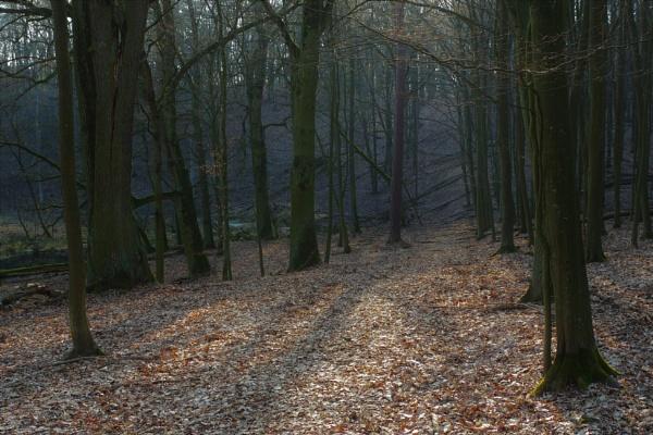 POLAND - Nature\'s Impressions No.49 by PentaxBro