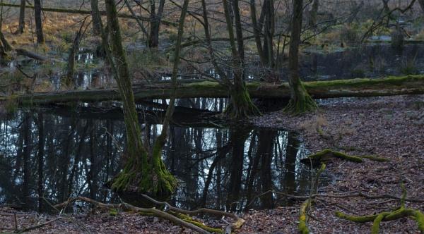 POLAND - Nature\'s Impressions No.66 by PentaxBro