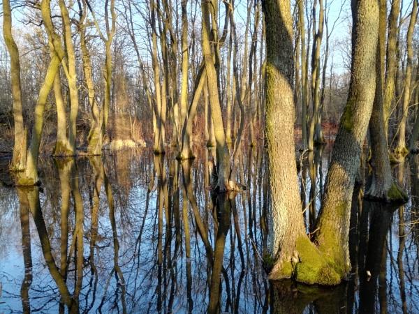POLAND - Nature\'s Impressions No.23 by PentaxBro