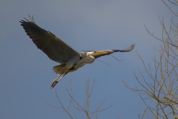 FlyBy Heron
