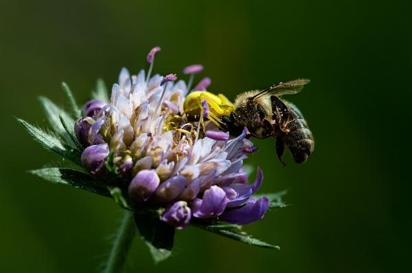 The Honey Trap by Zydeco_Joe
