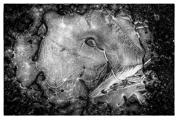 Elephant\'s eye. by seahawk
