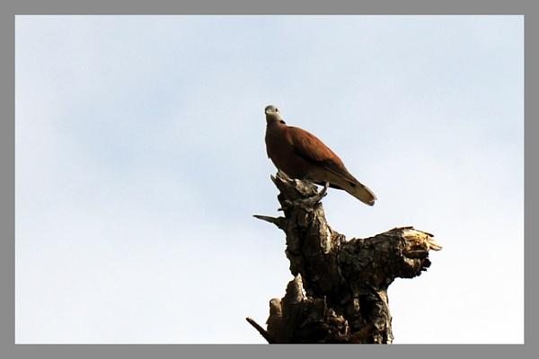 ID the bird by prabhusinha