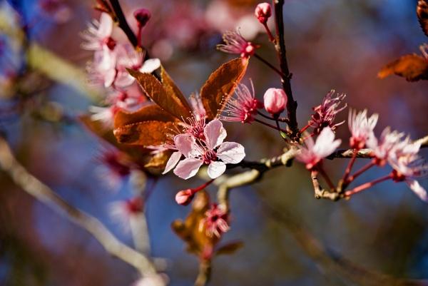 UK Spring blossom by Mannyfreedman
