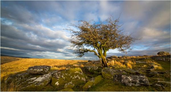 Dartmoor by mjparmy