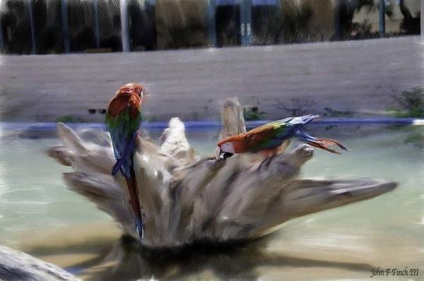 My Painted Birds by blackbird3