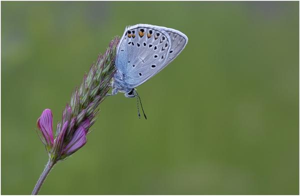 Amanda\'s Blue by NigelKiteley