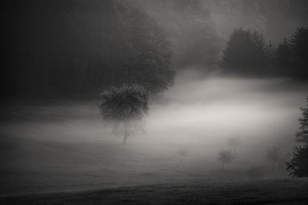 By the pale moonlight by mlseawell