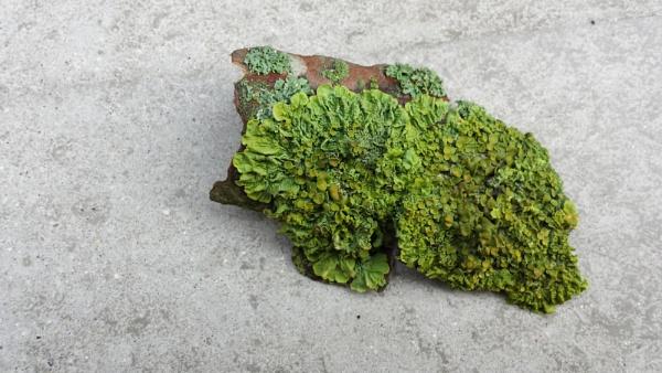Green Energy... by Chinga
