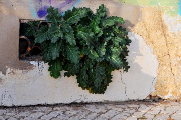 Wall greens.... by Chinga