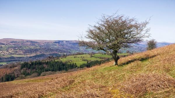 Lone Tree by Kilmas