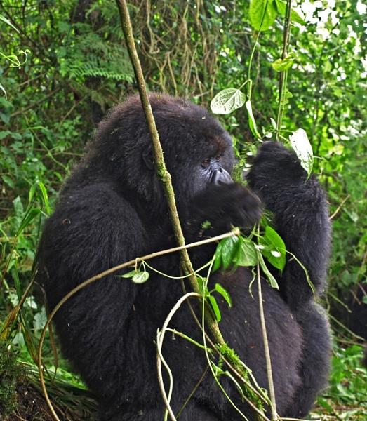 Peaceful in Rwanda