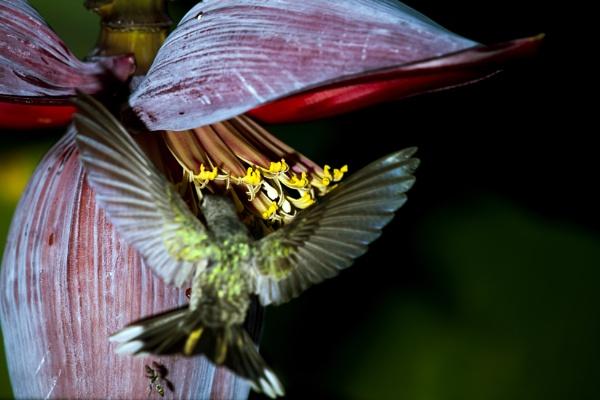Chupado la flor del topocho by GBauer