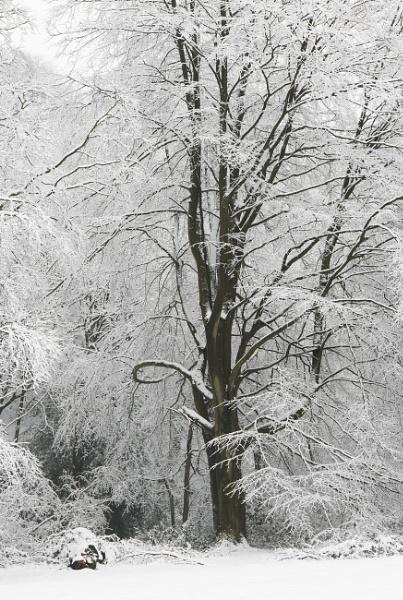 Snow Queen by Trevhas